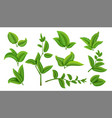 realistic tea leaves and branches green plants vector image
