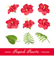 set of tropical flowers elements vector image vector image