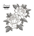 peony flowers and leaves in japanese tattoo style vector image vector image