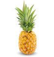realistic pineapple on a white background close-up vector image