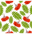 beautiful seamless pattern with rowan vector image vector image