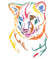 colorful decorative portrait of dog shiba inu vector image