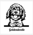 goldendoodle - peeking dogs - breed face head vector image vector image