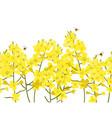 seamless rape seed border flower vector image vector image