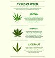 types weed vertical infographic vector image vector image