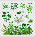 green herbal elements decorative beauty nature vector image