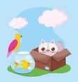 pet shop cat in box fish and bird animals vector image