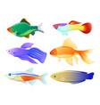 aquarium fish specie cartoon set vector image vector image