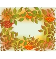 Frame from autumn leaves and rowan EPS10 vector image vector image
