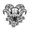 rose tattoo with skull of a sheep horns vector image vector image