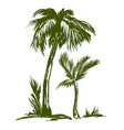 palm collection hand drawn vector image