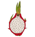 dragon fruit or pitaya in cross section vector image vector image