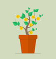 Money plant flat icon vector image vector image