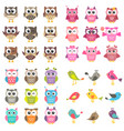set different kinds birds and owls vector image