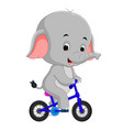 cute happy elephant cycling vector image vector image
