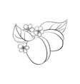 drawing plums vector image