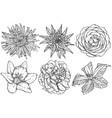 flowers sketch vector image vector image