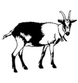 Goat from Side View vector image vector image