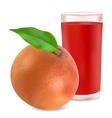 grapefruit and grapefruit juice vector image vector image