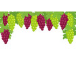 green and dark red grapes border vector image