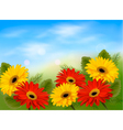 Nature background with colorful beautiful flowers vector image