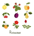 Set of Plants vector image vector image