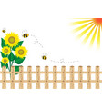 Background sunflower vector image