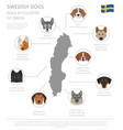dogs by country of origin swedish dog breeds vector image vector image