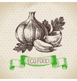 Hand drawn sketch garlic vegetable Eco food vector image vector image