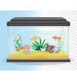 transparent aquarium 04 vector image vector image