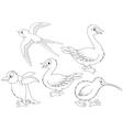 Wild birds vector image