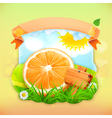 Fresh fruit label orange background for making vector image