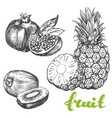 fruit pomegranate kiwi pineapple set hand drawn vector image vector image