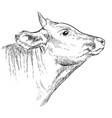 head horned bull hand drawing vector image