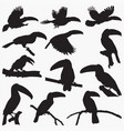 toucan silhouettes vector image vector image