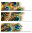 fashion colorful backgrounds set with peacock vector image