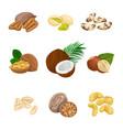 set nuts vector image