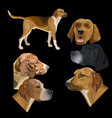 set of hunting dogs vector image vector image
