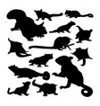 sugar glider animal silhouettes vector image vector image