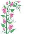 Flowering bindweed vector image vector image