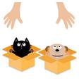 human hand dog cat inside opened cardboard vector image vector image