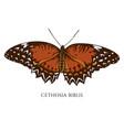 set hand drawn colored cethosia biblis vector image