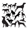 weimaraner dog animal silhouettes vector image vector image