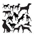 weimaraner dog animal silhouettes vector image