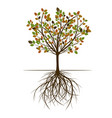 autumn spring tree vector image