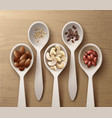 different nuts in spoons vector image vector image