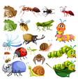 different types of insects vector image vector image