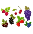 Isolated garden and wild berries fruits vector image vector image