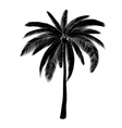 Palm silhouette vector image
