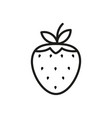strawberry outline icon fruit symbol healthy food vector image vector image
